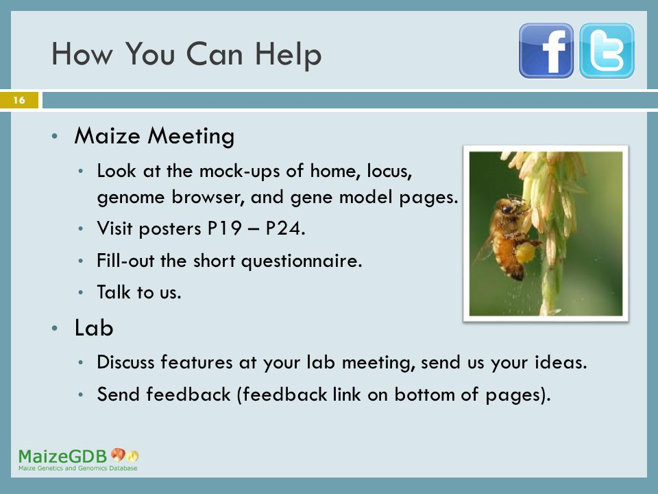 16 How You Can Help Maize Meeting Look at the mock-ups of home, locus, genome browser, and gene model pages.