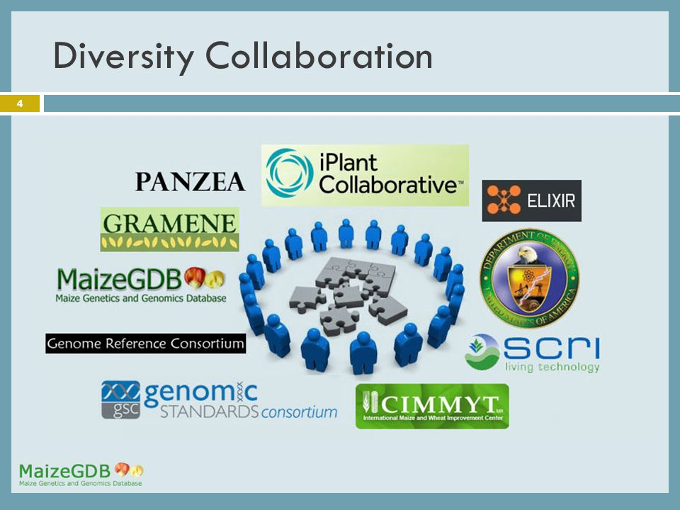 4 Diversity Collaboration