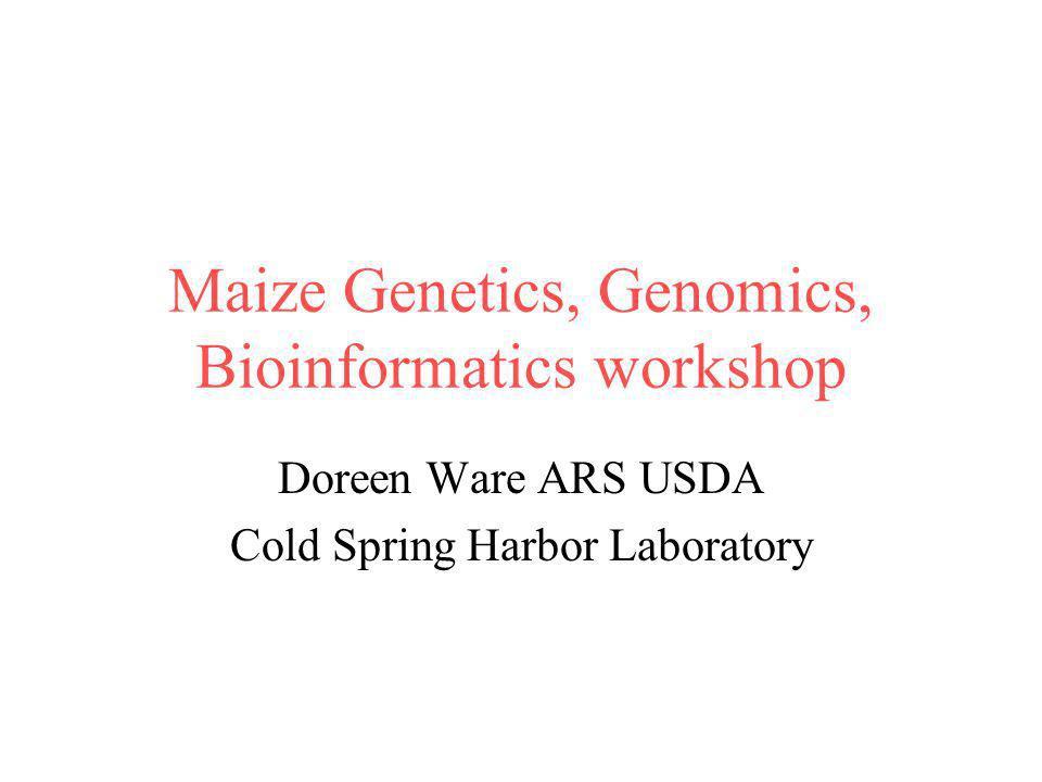 Maize Genetics, Genomics, Bioinformatics workshop Doreen Ware ARS USDA Cold Spring Harbor Laboratory