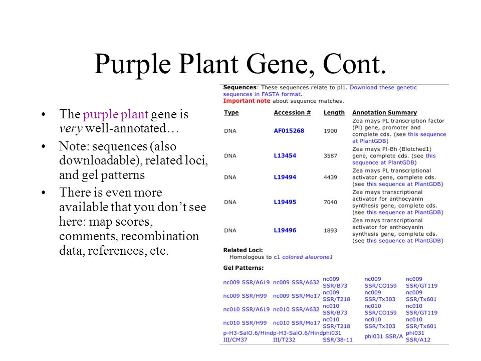 Purple Plant Gene, Cont. The purple plant gene is very well-annotated… Note: sequences (also downloadable), related loci, and gel patterns There is ev