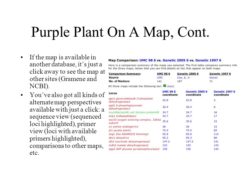 Purple Plant On A Map, Cont.