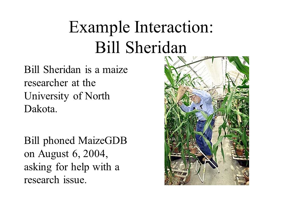 Example Interaction: Bill Sheridan Bill Sheridan is a maize researcher at the University of North Dakota. Bill phoned MaizeGDB on August 6, 2004, aski