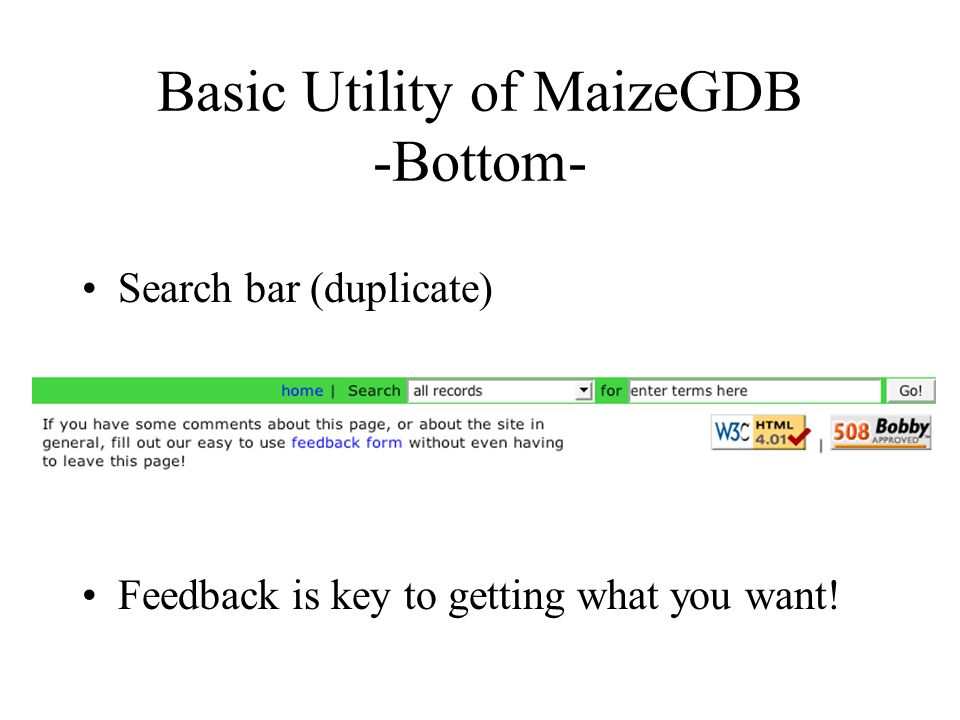 Basic Utility of MaizeGDB -Bottom- Search bar (duplicate) Feedback is key to getting what you want!