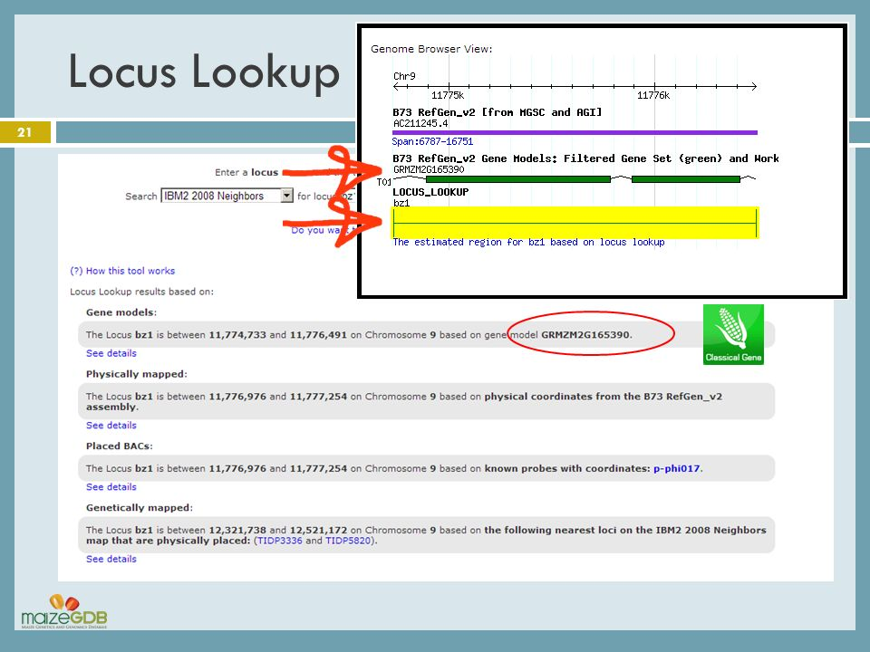 Locus Lookup 21