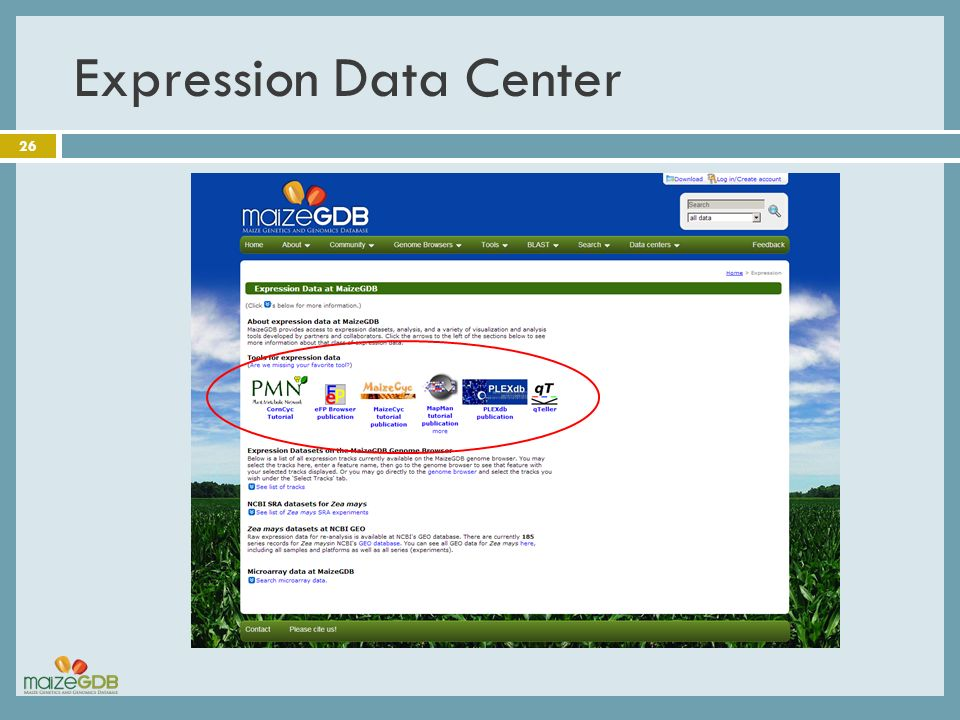 Expression Data Center 26