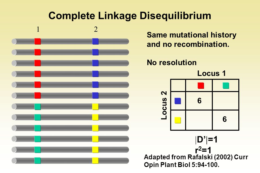 12 Complete Linkage Disequilibrium Adapted from Rafalski (2002) Curr Opin Plant Biol 5:94-100. D =1 r 2 =1 6 6 Locus 1 Locus 2 Same mutational history