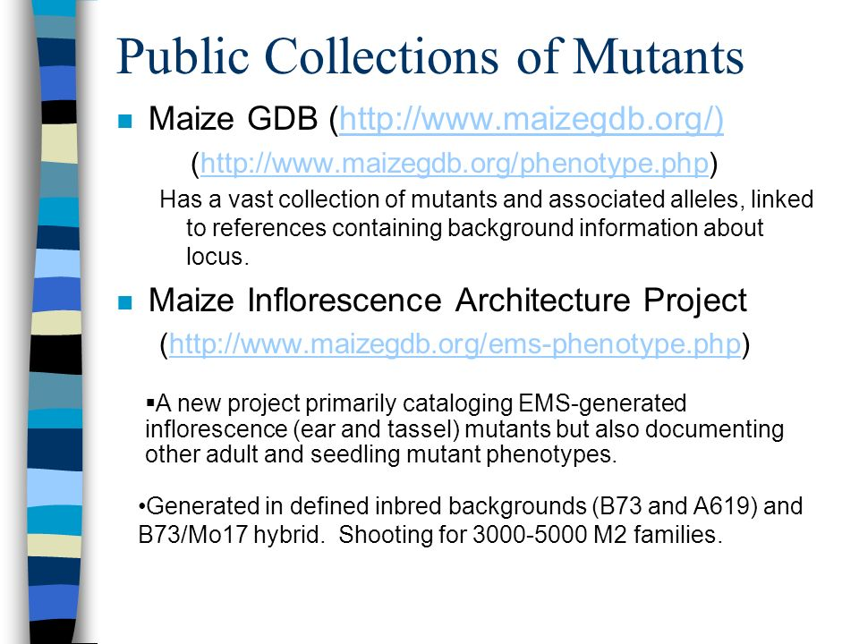 Public Collections of Mutants n Maize GDB (http://www.maizegdb.org/)http://www.maizegdb.org/) (http://www.maizegdb.org/phenotype.php)http://www.maizeg