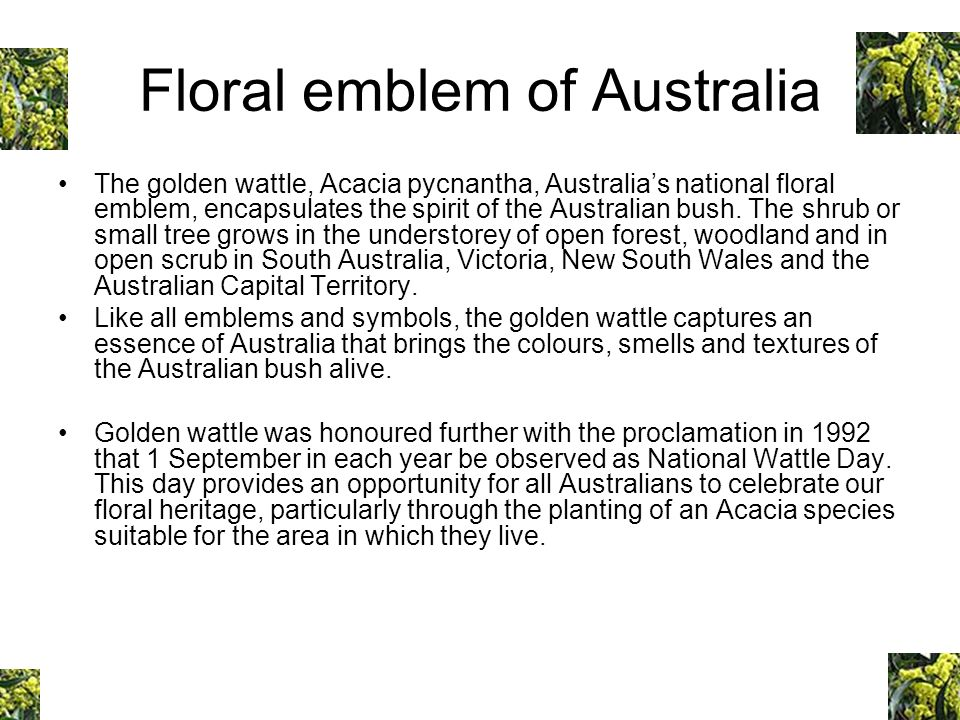 Floral emblem of Australia The golden wattle, Acacia pycnantha, Australias national floral emblem, encapsulates the spirit of the Australian bush. The