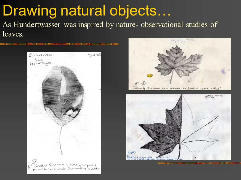 Drawing natural objects… As Hundertwasser was inspired by nature- observational studies of leaves.