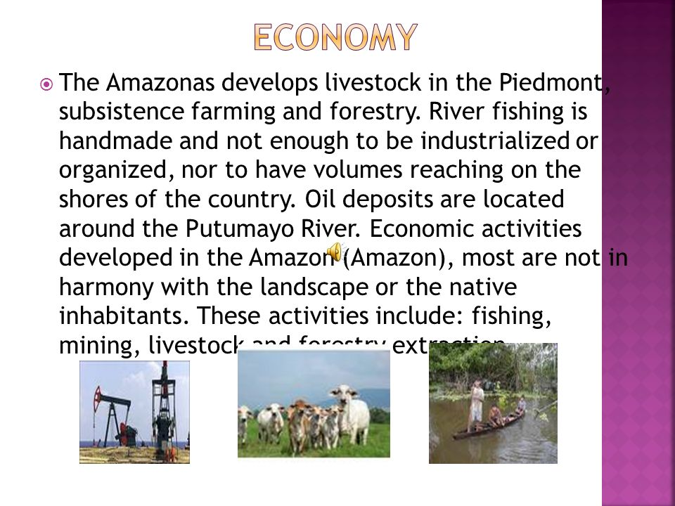 The Amazonas develops livestock in the Piedmont, subsistence farming and forestry.