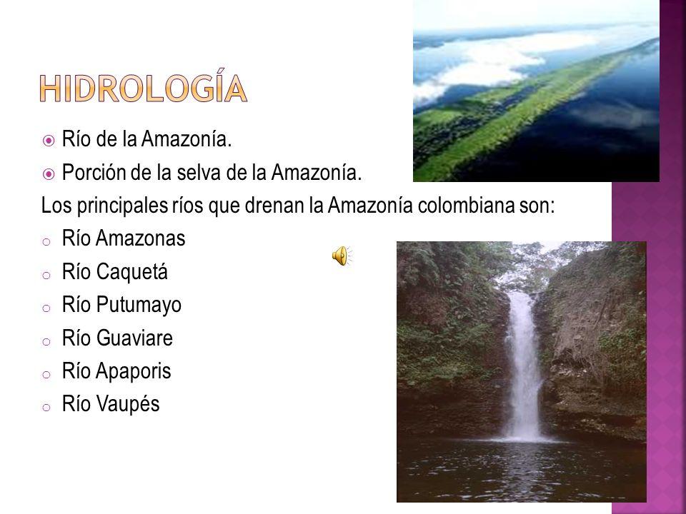Río de la Amazonía. Porción de la selva de la Amazonía.