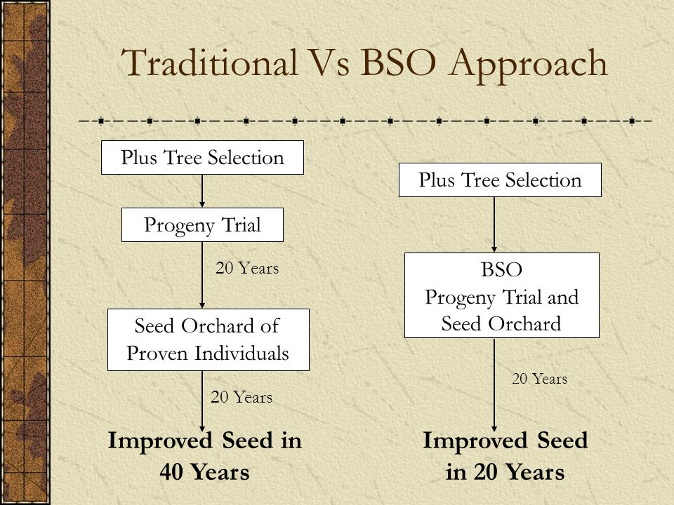 Traditional Vs BSO Approach Plus Tree Selection BSO Progeny Trial and Seed Orchard 20 Years Improved Seed in 20 Years Plus Tree Selection Progeny Trial Seed Orchard of Proven Individuals 20 Years Improved Seed in 40 Years