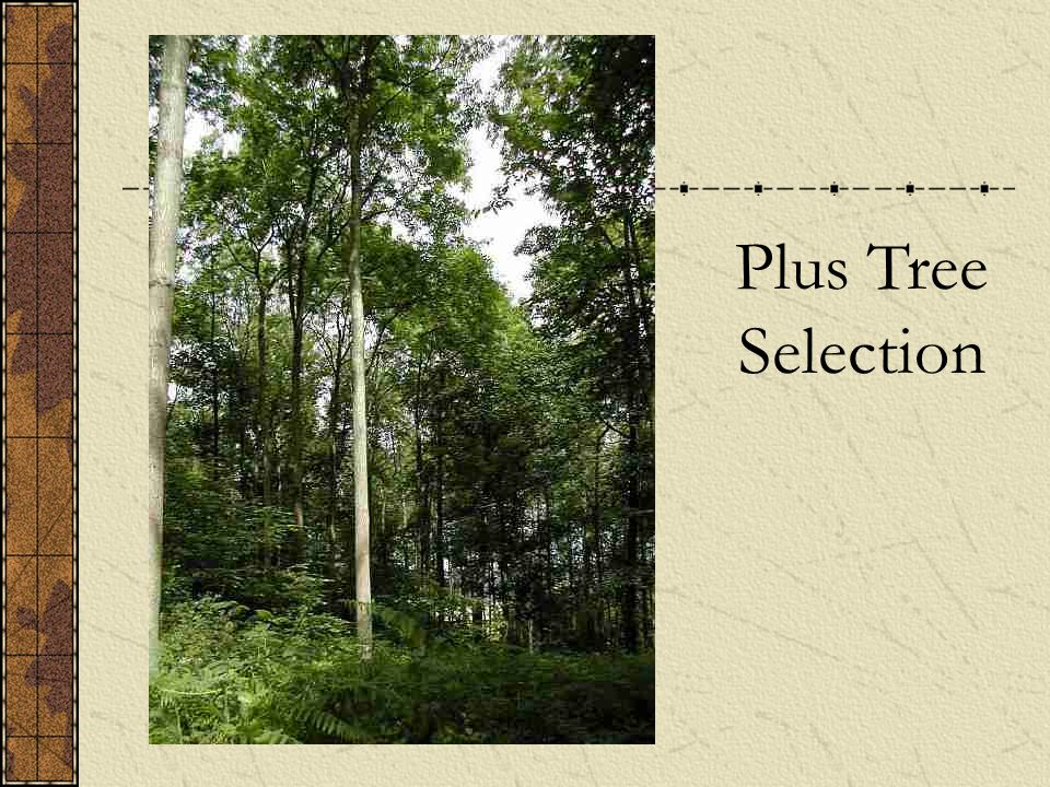 Plus Tree Selection
