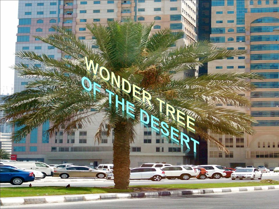 Do you know this place in Dubai which gets its name from the wonder tree?