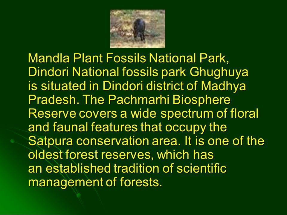 Mandla Plant Fossils National Park, Dindori National fossils park Ghughuya is situated in Dindori district of Madhya Pradesh. The Pachmarhi Biosphere