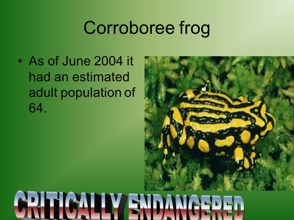 Corroboree frog As of June 2004 it had an estimated adult population of 64.