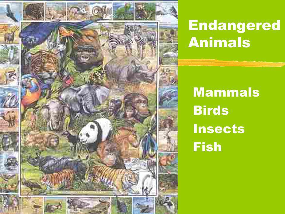 Mammals Birds Insects Fish Endangered Animals