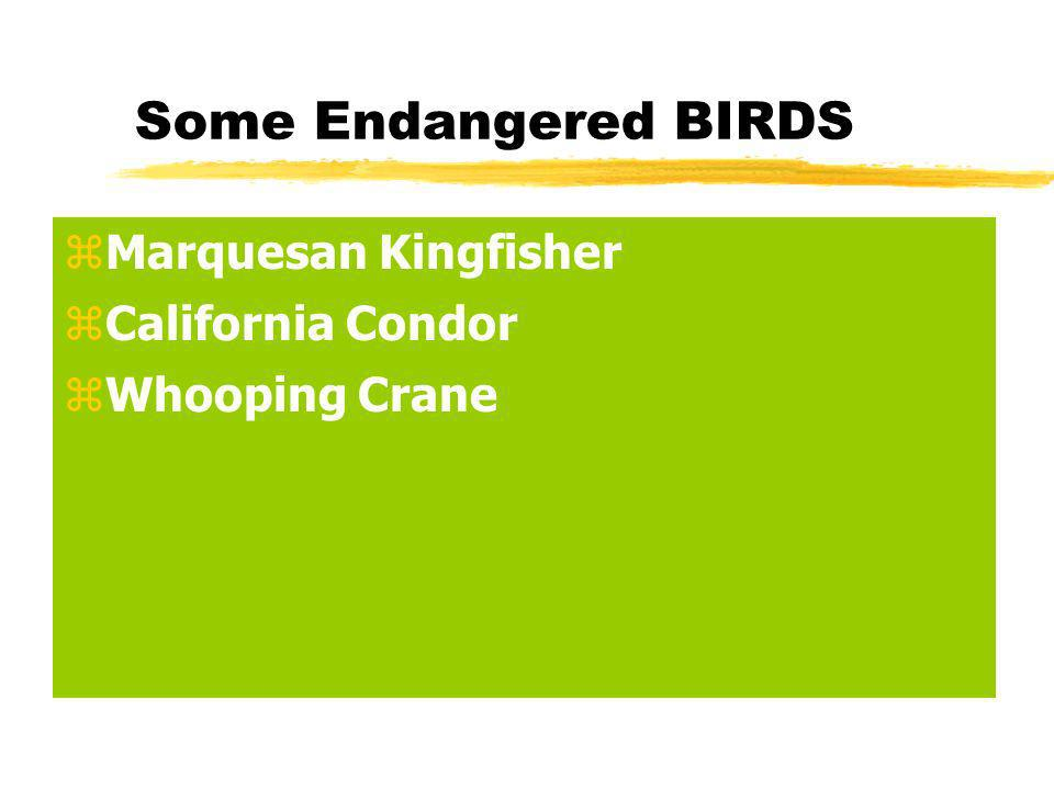 Some Endangered BIRDS zMarquesan Kingfisher zCalifornia Condor zWhooping Crane