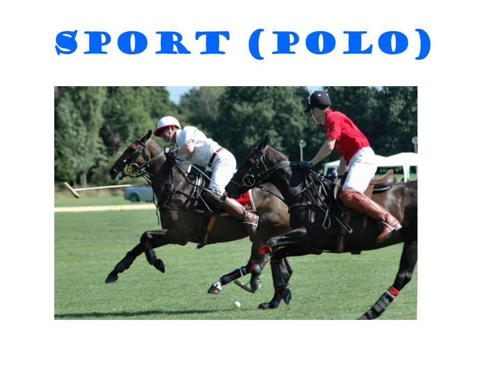 Sport (POLO)