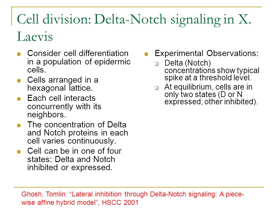 Cell division: Delta-Notch signaling in X.