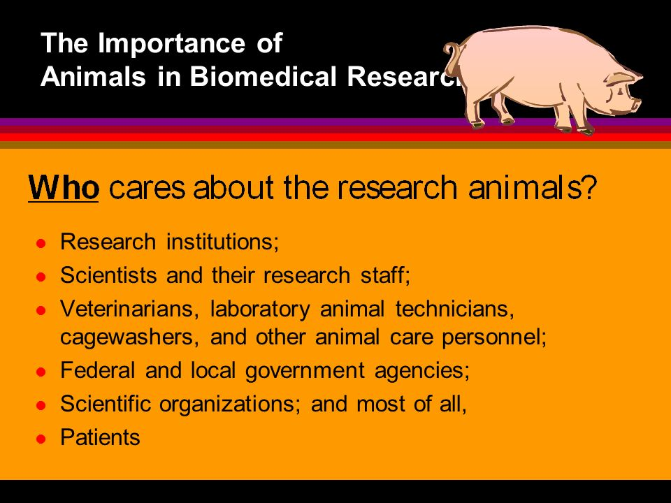 The Importance of Animals in Biomedical Research Research institutions; Scientists and their research staff; Veterinarians, laboratory animal technici