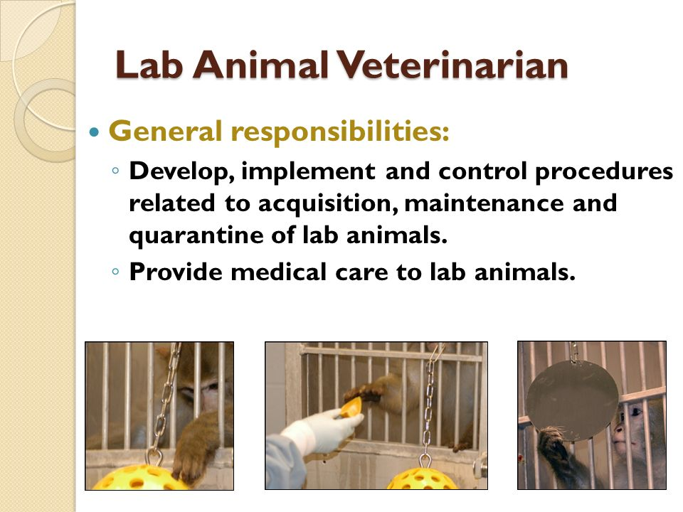 Lab Animal Veterinarian General responsibilities: Develop, implement and control procedures related to acquisition, maintenance and quarantine of lab animals.