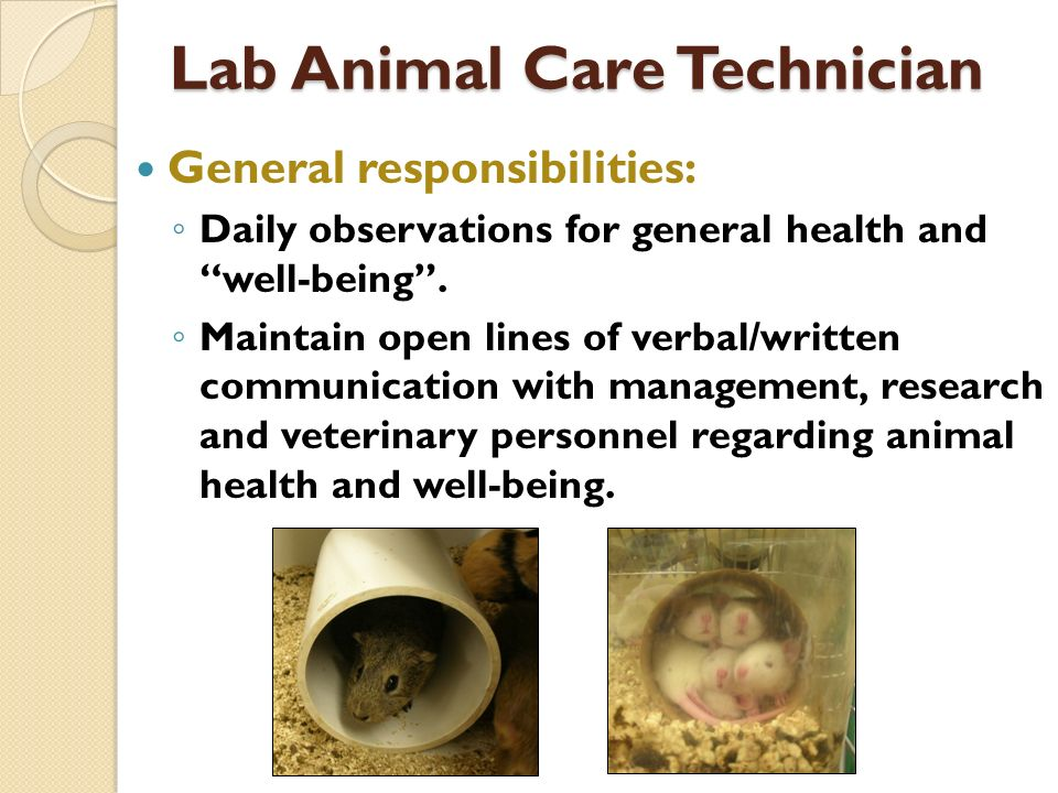 Lab Animal Care Technician General responsibilities: Daily observations for general health and well-being.