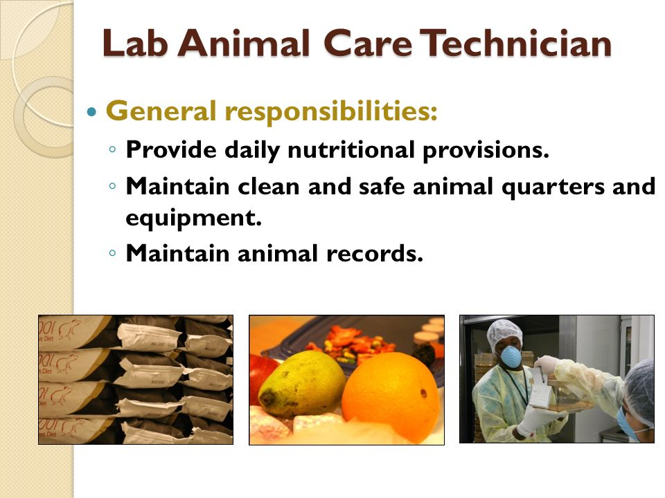 Lab Animal Care Technician General responsibilities: Provide daily nutritional provisions. Maintain clean and safe animal quarters and equipment. Main