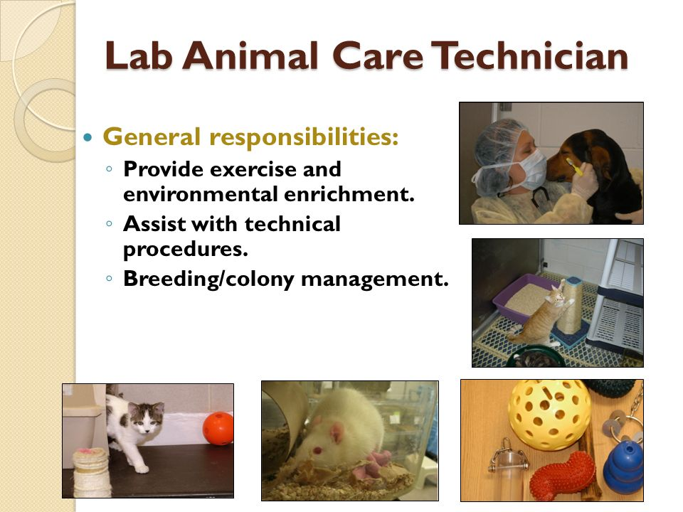Lab Animal Care Technician General responsibilities: Provide exercise and environmental enrichment.