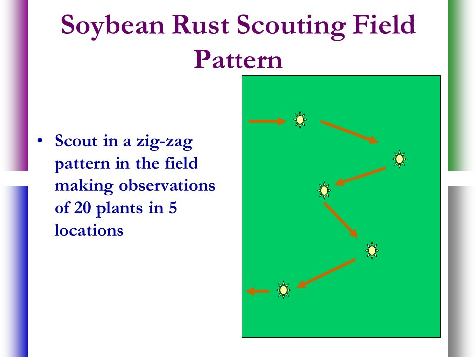 Soybean Rust Scouting Field Pattern Scout in a zig-zag pattern in the field making observations of 20 plants in 5 locations