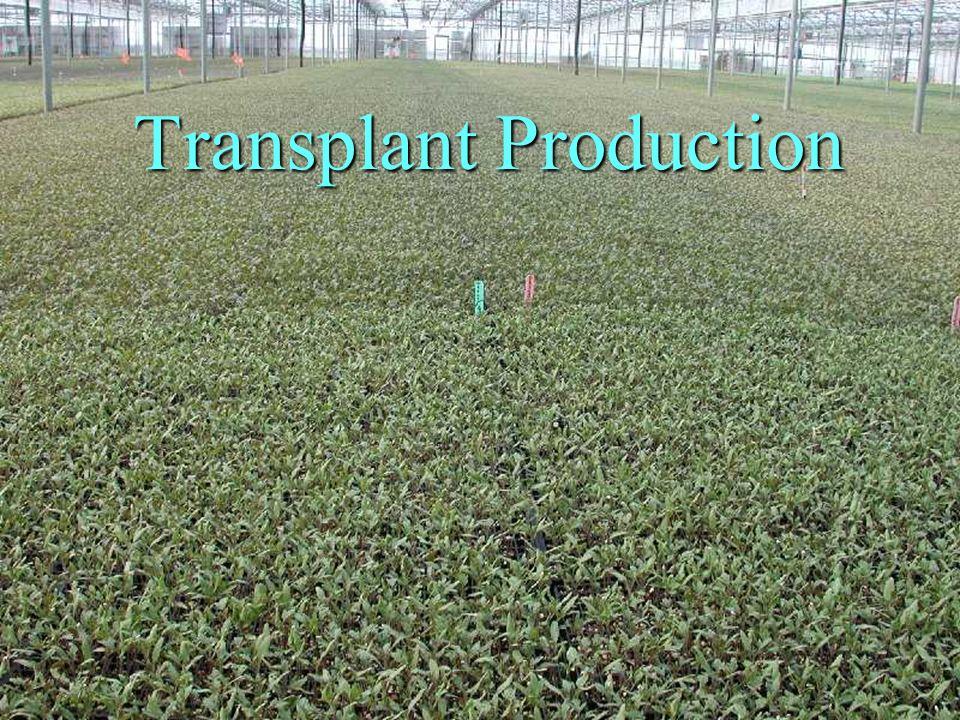 Transplant Production
