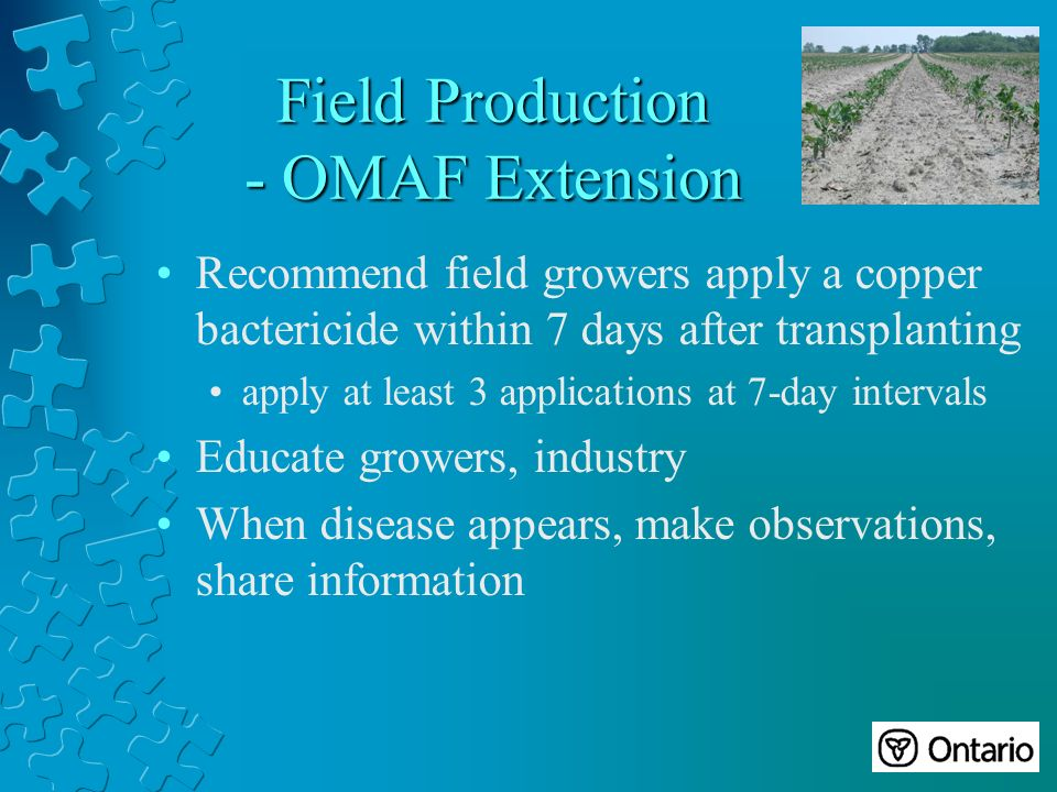 Field Production - OMAF Extension Recommend field growers apply a copper bactericide within 7 days after transplanting apply at least 3 applications at 7-day intervals Educate growers, industry When disease appears, make observations, share information