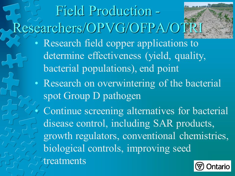 Field Production - Researchers/OPVG/OFPA/OTRI Research field copper applications to determine effectiveness (yield, quality, bacterial populations), end point Research on overwintering of the bacterial spot Group D pathogen Continue screening alternatives for bacterial disease control, including SAR products, growth regulators, conventional chemistries, biological controls, improving seed treatments