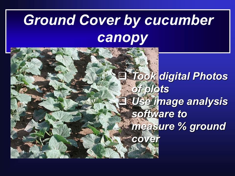 Ground Cover by cucumber canopy Took digital Photos of plots Took digital Photos of plots Use image analysis software to measure % ground cover Use image analysis software to measure % ground cover
