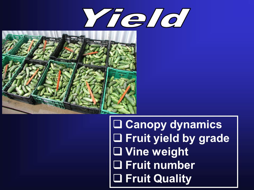 Canopy dynamics Fruit yield by grade Vine weight Fruit number Fruit Quality
