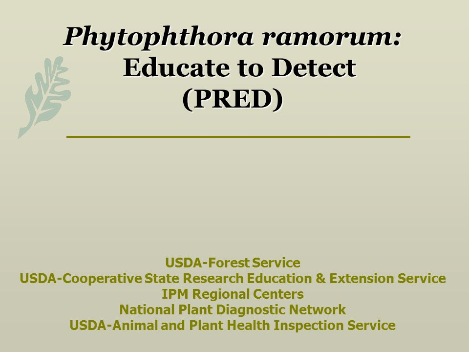 Phytophthora ramorum: Educate to Detect (PRED) Phytophthora ramorum: Educate to Detect (PRED) USDA-Forest Service USDA-Cooperative State Research Education & Extension Service IPM Regional Centers National Plant Diagnostic Network USDA-Animal and Plant Health Inspection Service