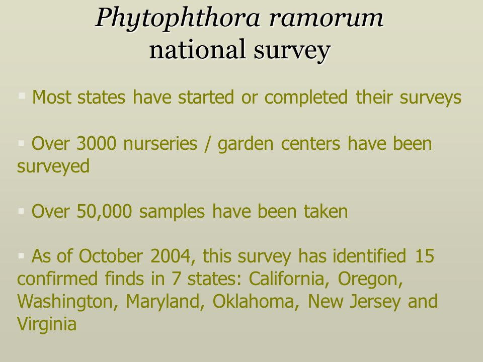 Phytophthora ramorum national survey Most states have started or completed their surveys Over 3000 nurseries / garden centers have been surveyed Over 50,000 samples have been taken As of October 2004, this survey has identified 15 confirmed finds in 7 states: California, Oregon, Washington, Maryland, Oklahoma, New Jersey and Virginia