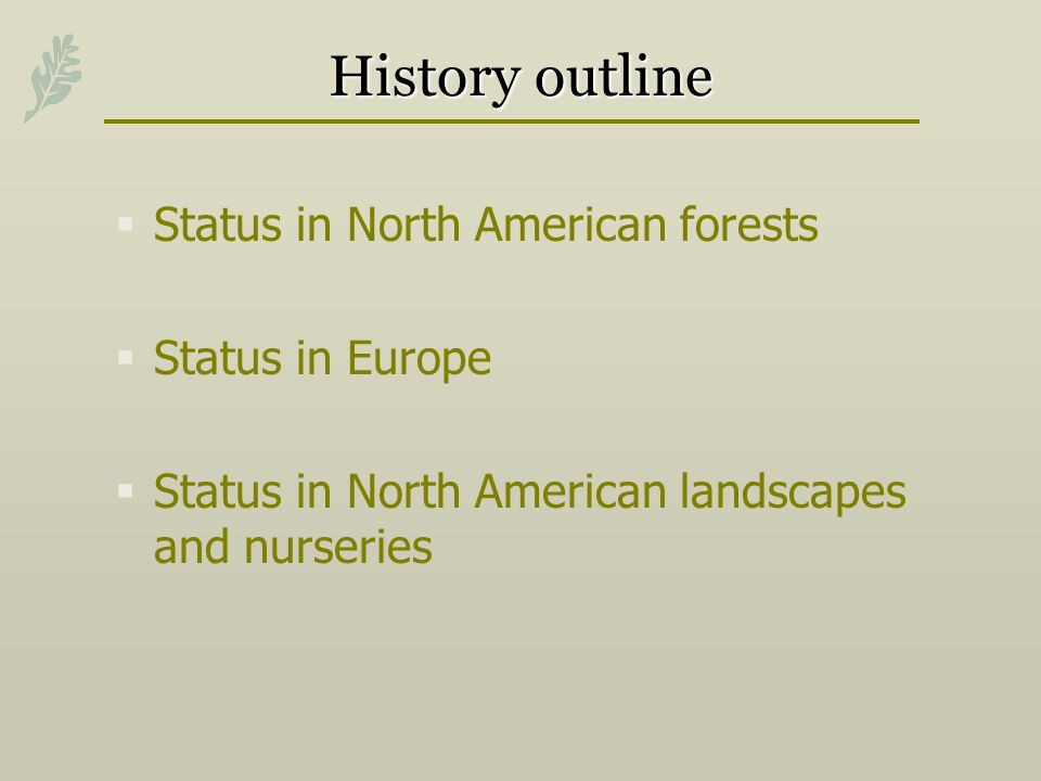 History outline Status in North American forests Status in Europe Status in North American landscapes and nurseries