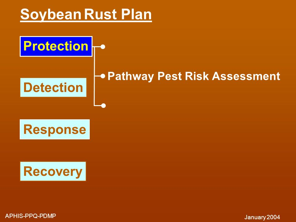 Soybean Rust Plan APHIS-PPQ-PDMP January 2004 Response Detection Recovery Pathway Pest Risk Assessment Protection