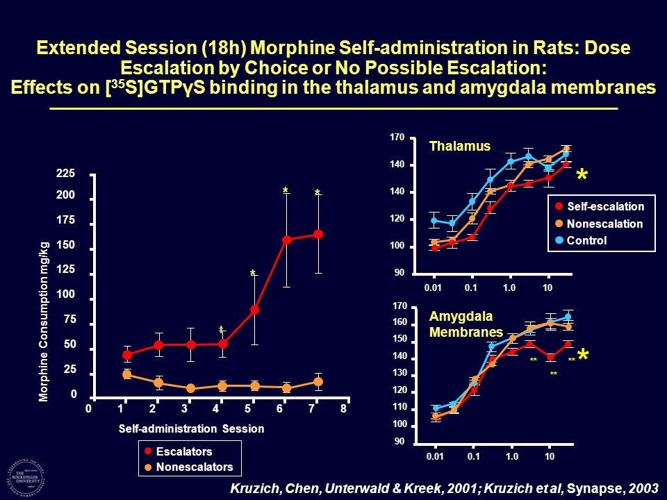 Extended Session (18h) Morphine Self-administration in Rats: Dose Escalation by Choice or No Possible Escalation: Effects on [ 35 S]GTPγS binding in t