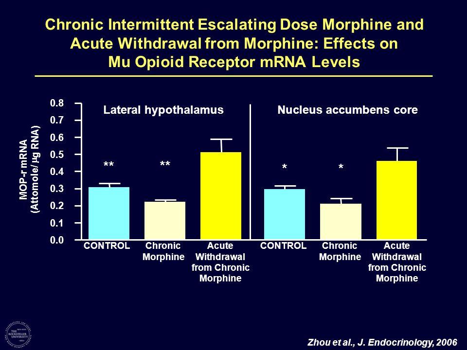 Zhou et al., J. Endocrinology, 2006 0.0 0.1 0.2 0.3 0.4 0.5 0.6 0.7 0.8 ** Lateral hypothalamusNucleus accumbens core * * MOP-r mRNA (Attomole/ g RNA)