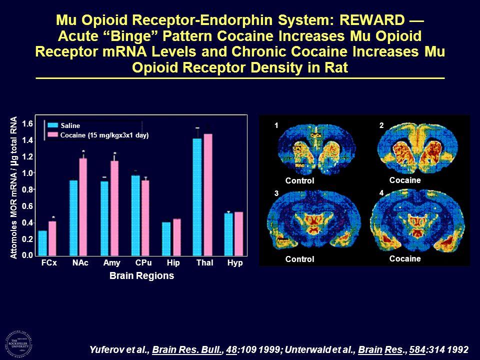 Mu Opioid Receptor-Endorphin System: REWARD Acute Binge Pattern Cocaine Increases Mu Opioid Receptor mRNA Levels and Chronic Cocaine Increases Mu Opio