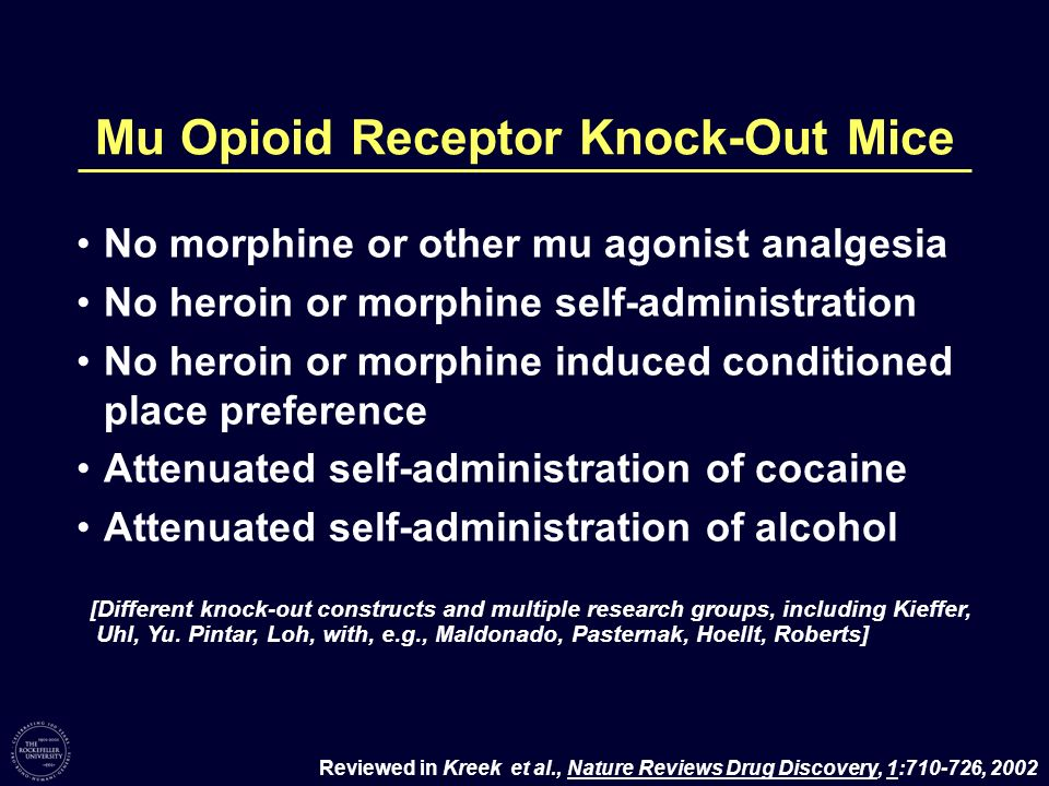 Mu Opioid Receptor Knock-Out Mice No morphine or other mu agonist analgesia No heroin or morphine self-administration No heroin or morphine induced co