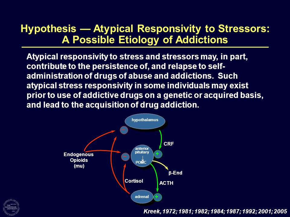 Endogenous Opioids (mu) – – -End adrenal CRF POMC hypothalamus ACTH anterior pituitary Cortisol + + Atypical responsivity to stress and stressors may,