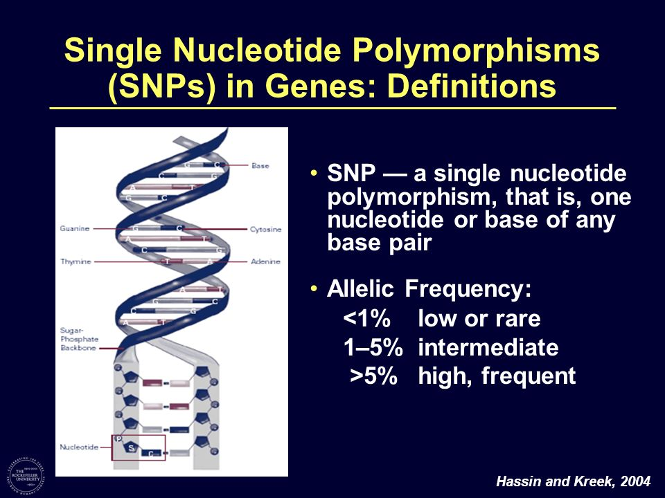 Single Nucleotide Polymorphisms (SNPs) in Genes: Definitions SNP a single nucleotide polymorphism, that is, one nucleotide or base of any base pair Al