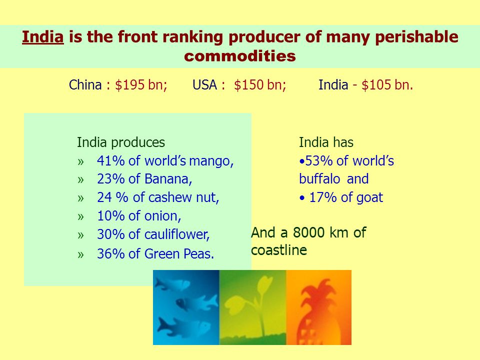 India is the front ranking producer of many perishable commodities India produces » 41% of worlds mango, » 23% of Banana, » 24 % of cashew nut, » 10%