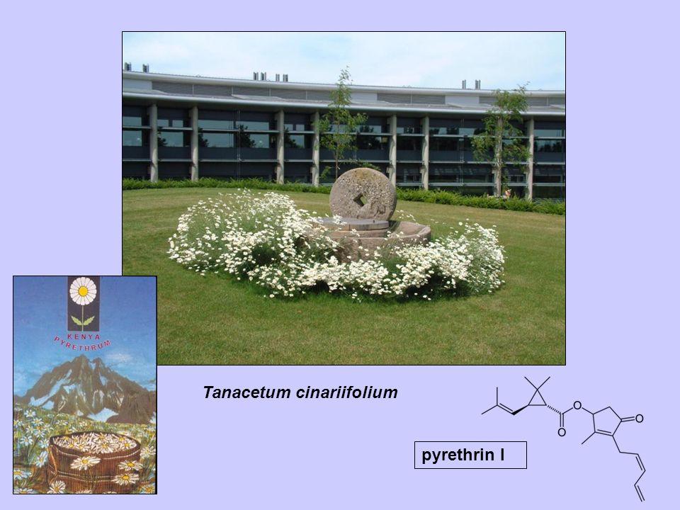 Tanacetum cinariifolium pyrethrin I
