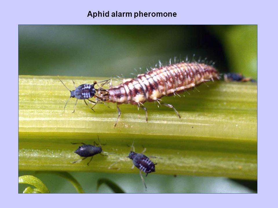 Aphid alarm pheromone