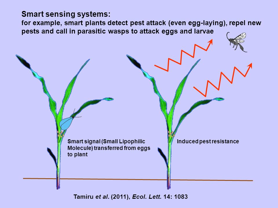 Smart sensing systems: for example, smart plants detect pest attack (even egg-laying), repel new pests and call in parasitic wasps to attack eggs and larvae Smart signal (Small Lipophilic Molecule) transferred from eggs to plant Induced pest resistance Tamiru et al.
