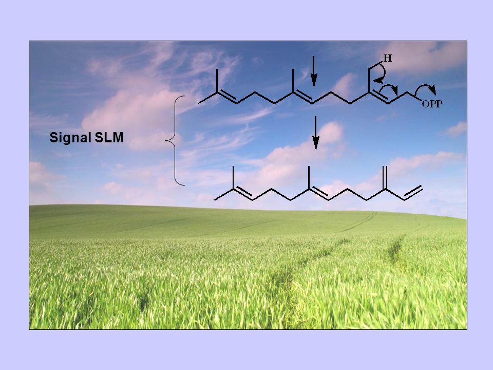 Signal SLM